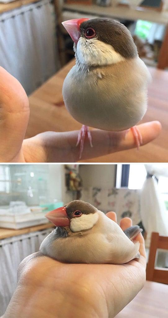 Эта птица просто плавится в моей ладони