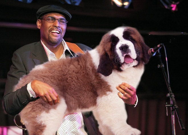 Image result for replaced with dogs