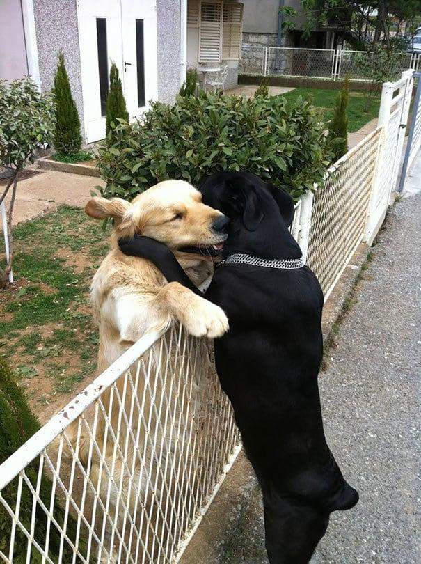 Собака Hug
