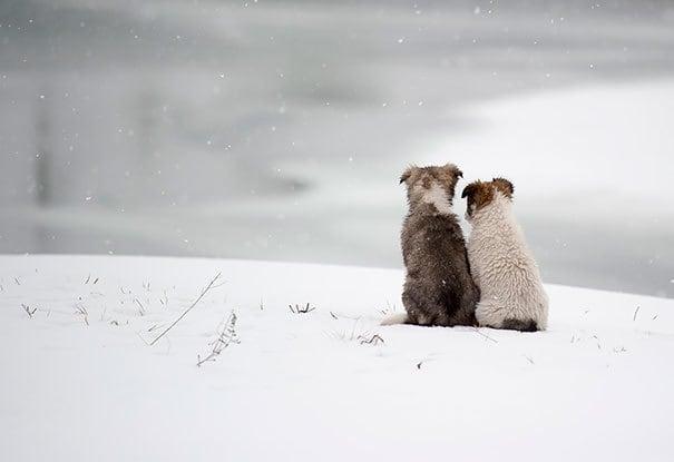 Лучшие друзья навсегда