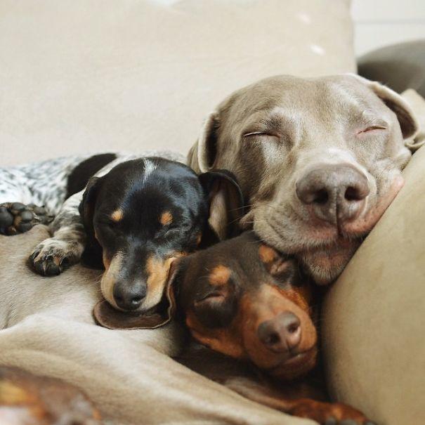 Три Лучшие друзья: Харлоу, шалфея и Reese