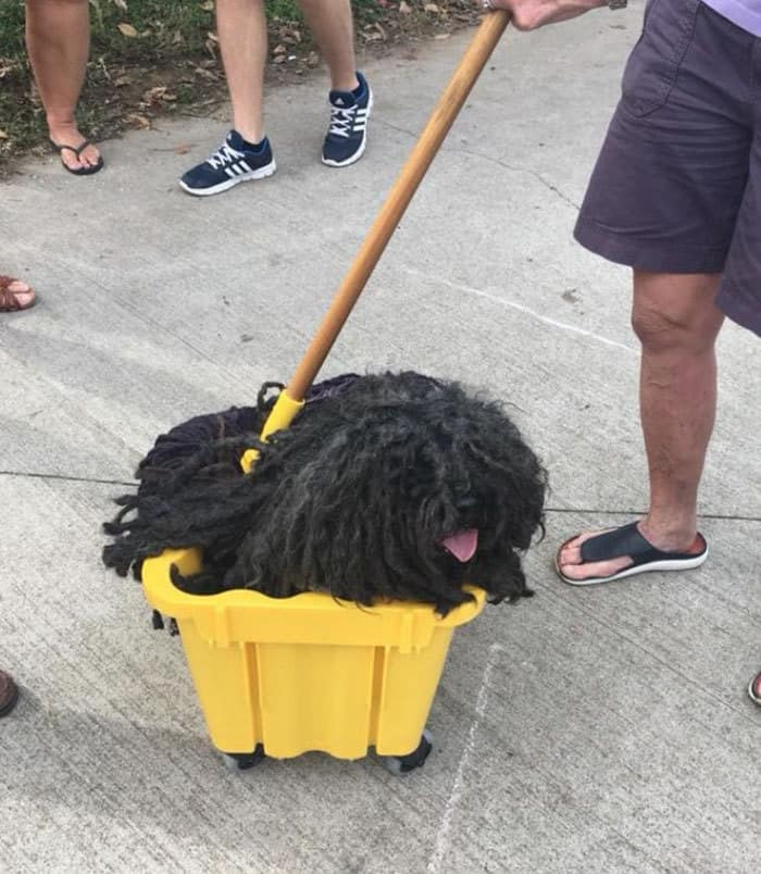 dog-mop-halloween-costume-mainstrasse-paw-rade-2.jpg