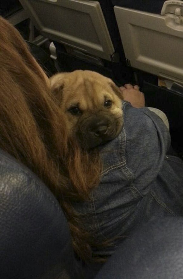 Lol Who Brings A Dog On The Plane? I Didnt Even Know That Was Allowed?