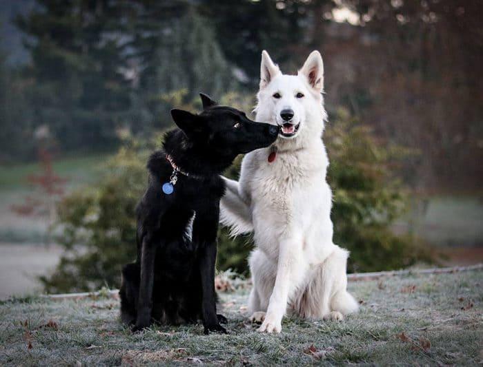 dog-wedding-photograpy-kaya-smiley-3