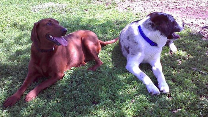 dogs-adopted-together-lucy-sully-3