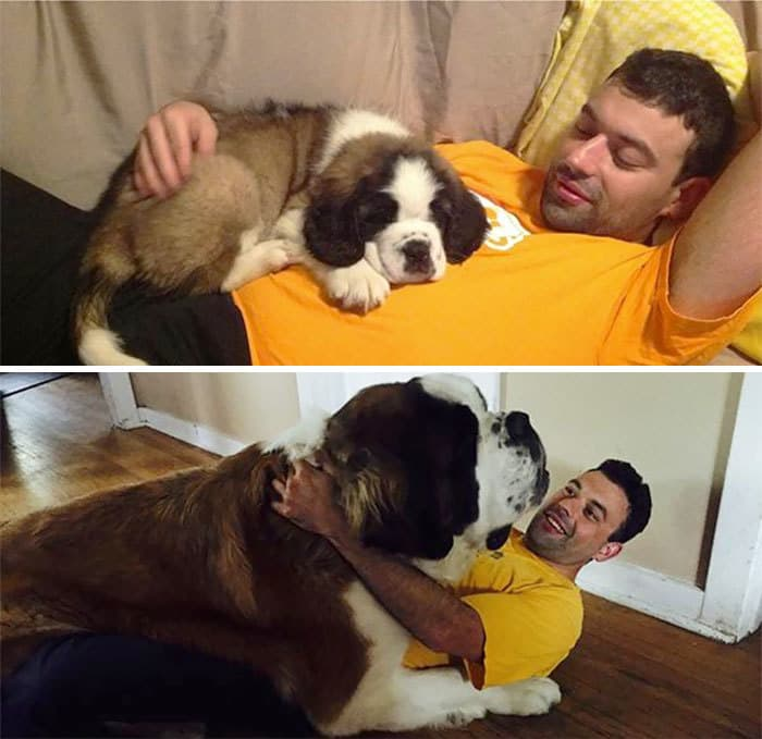 Once A Lap Dog, Always A Lap Dog