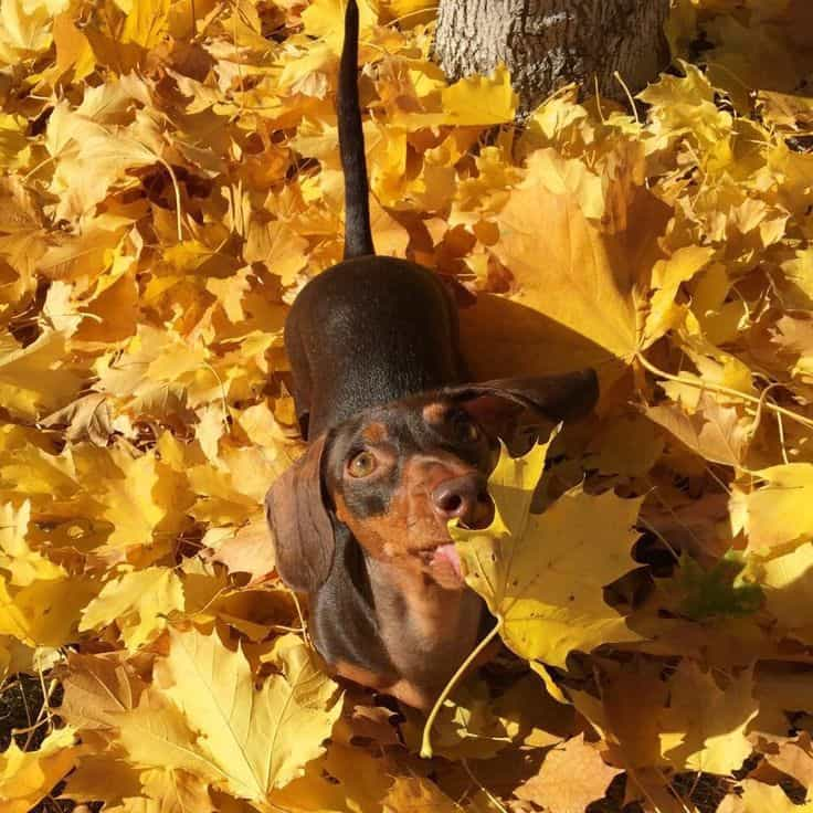 Image result for falling leaves dogs