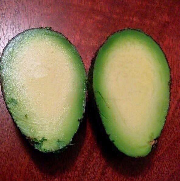 This pitless avocado: