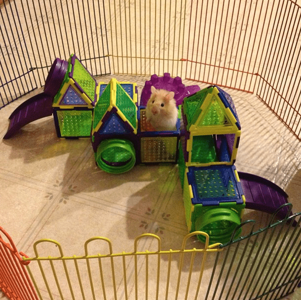 Hamsters get to be kings of expansive castles.