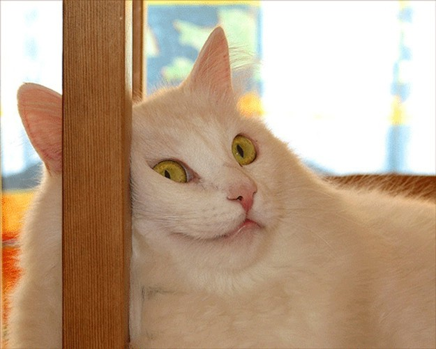 This cat who wonders if he'll ever find love.