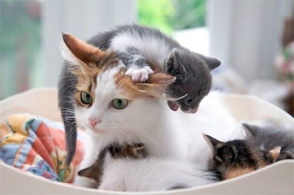 4. Мама, мама, мама, мама, мама животные, мама, фотография