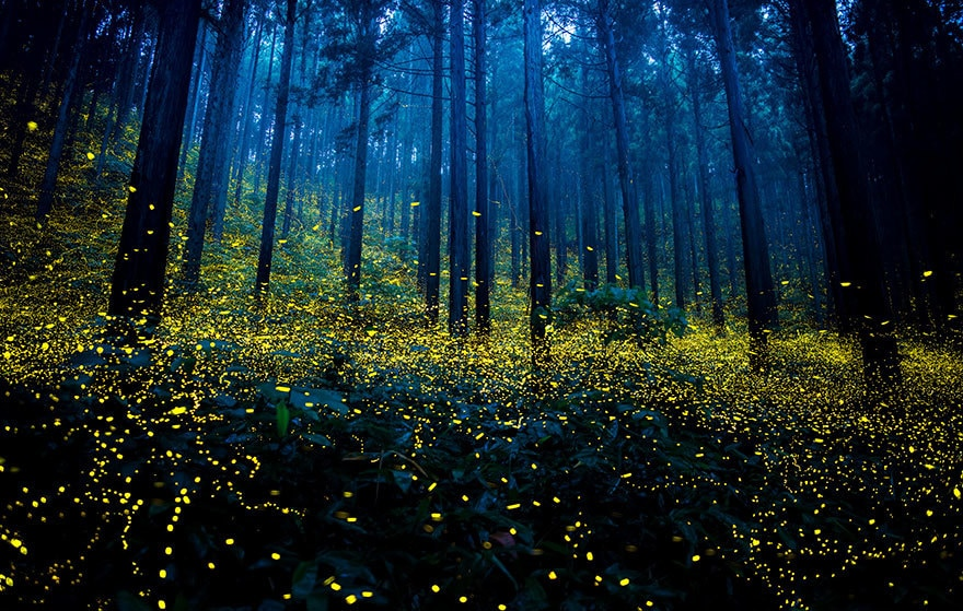 fireflies-long-exposure-photography-2016-japan-10