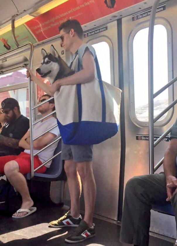 Собаки не разрешены на метро Нью-Йорка, если они не находятся в перевозчике. Итак, это произошло