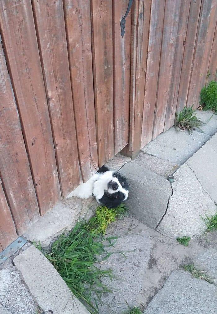 This Is My Как Соседи собака привлекает к себе внимание