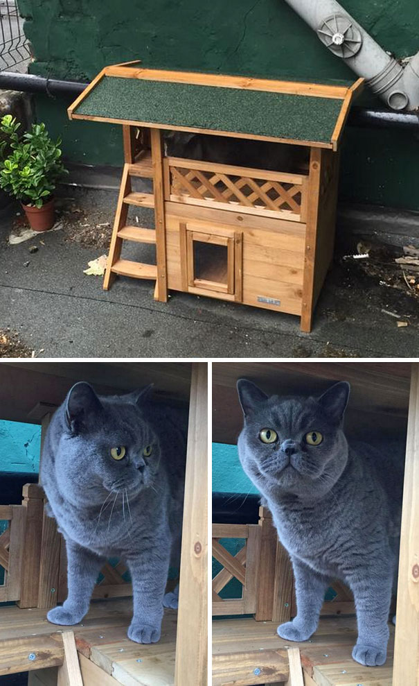 Got Drunk On Amazon And Bought The Cat A House