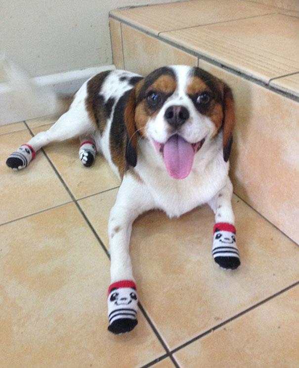 When I Was Drunk I Bought My Dog Socks Off Ebay