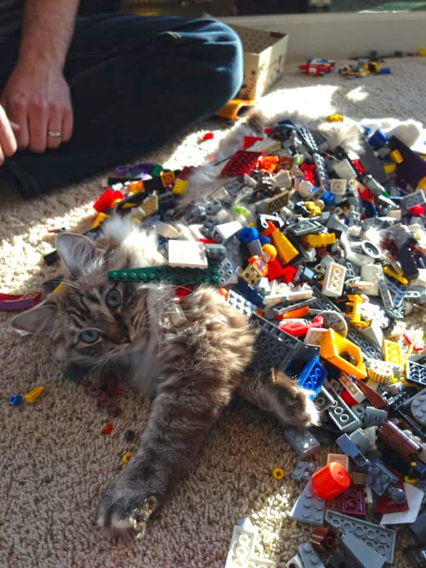 My 5-Year-Old Son Is Getting Good At Legos. He Built A Cat
