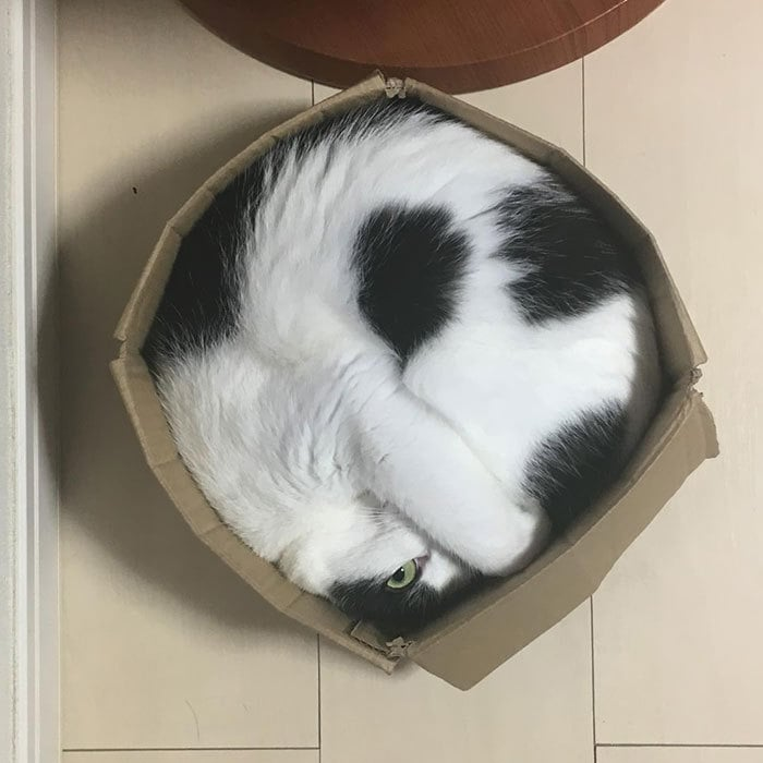 Regular Circle Cat