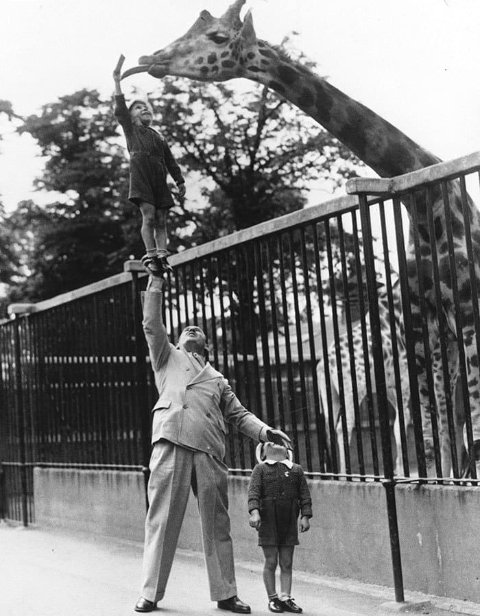 Paul Remos, A Circus Strongman, Hoists His Son Up In The Air Using Only His Right Arm To Feed A Giraffe At The London Zoo, 1950s