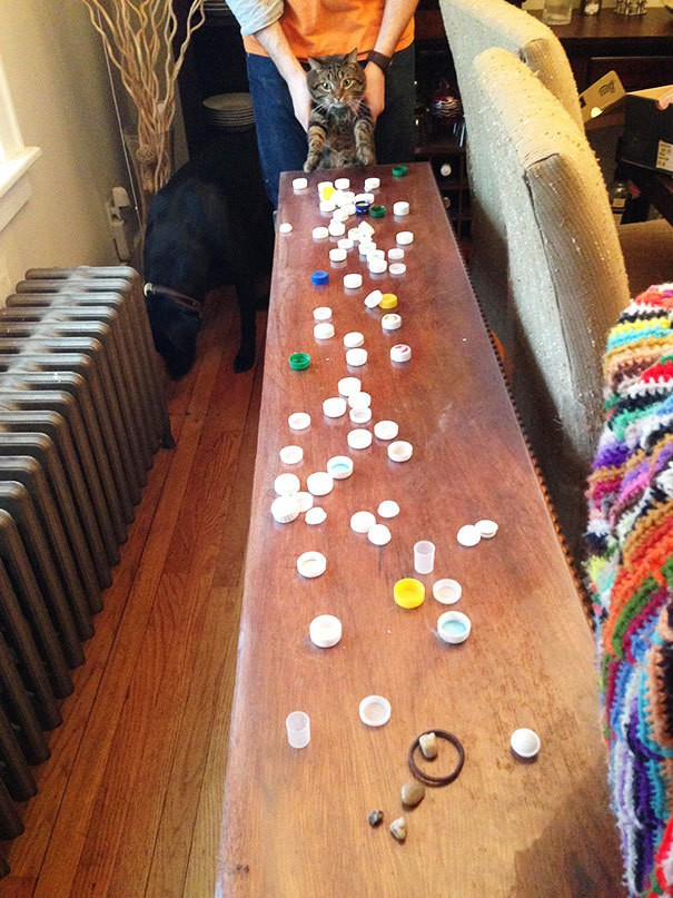 Our Cat Steals And Hoards Bottle Caps. Found His Stash While Cleaning