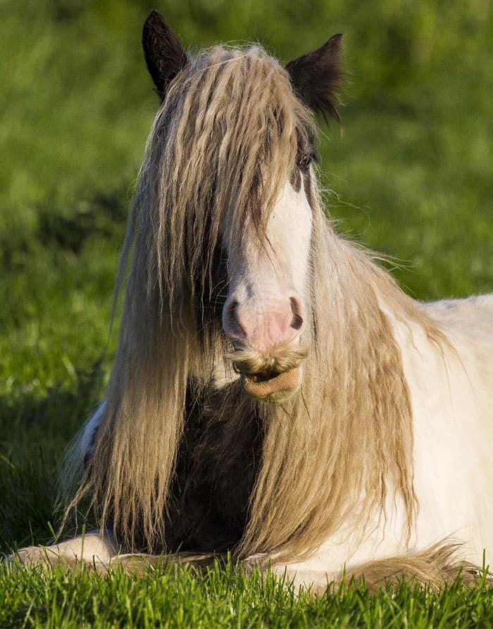 Horse-Moustaches