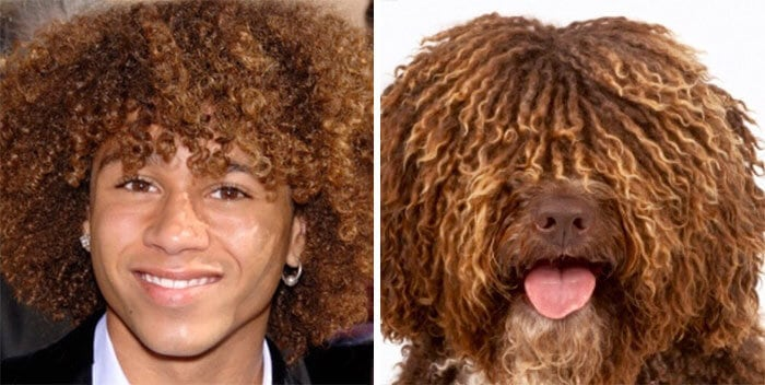 люди похожи на собак 3 (1)