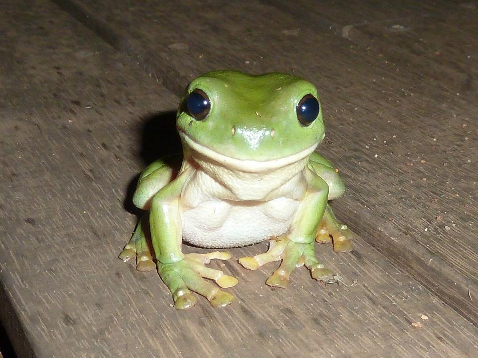 Ridiculously photogenic frog