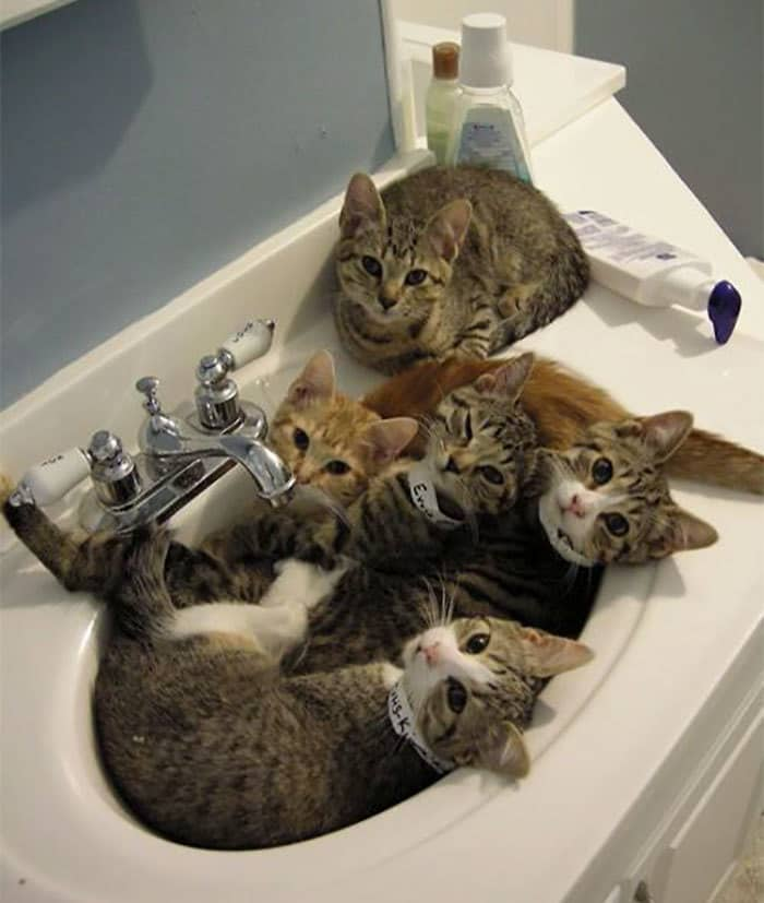 If They Fits... They Sits