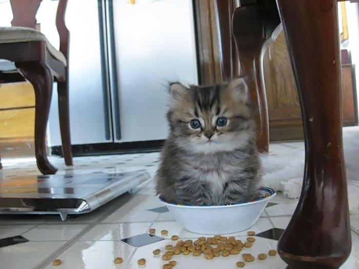 Kitty! That