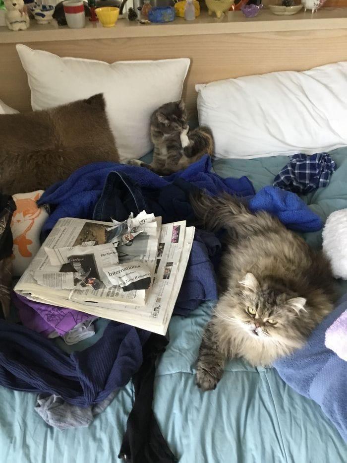 Вы хотите прочитать новости? Неа. (Бонус: в середине моей чистой одежды)