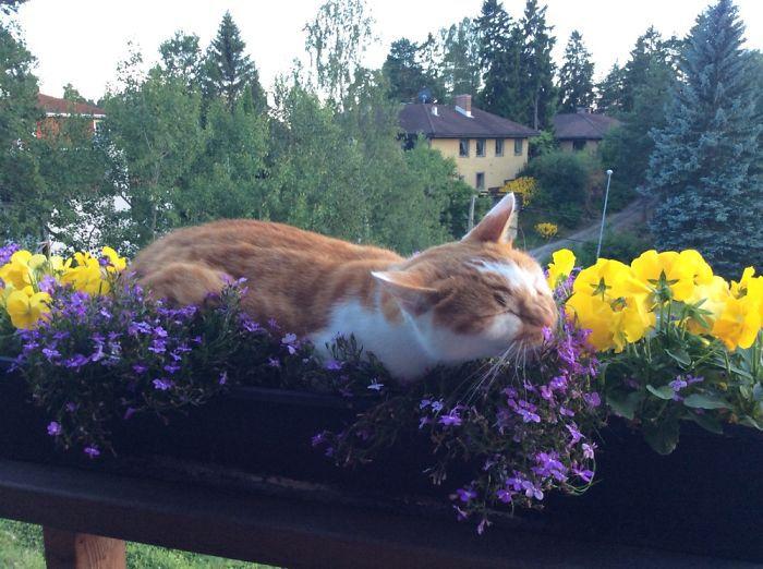 Должен ли он лежать на цветах, чтобы их навестить?