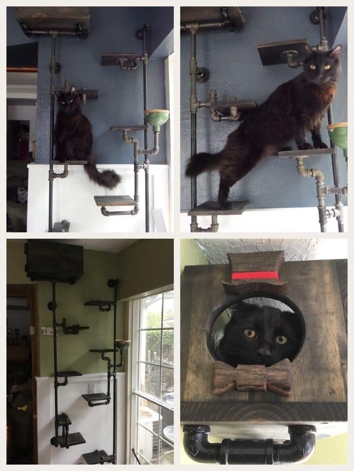 Наши кошки, взбирающиеся стены. Сделал это, чтобы получить свою пищу и уйти от собаки.