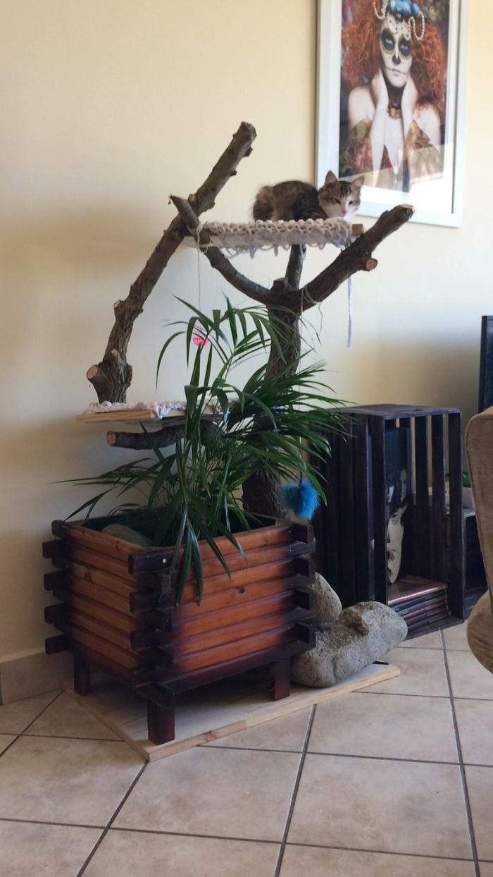 We Made A Cat Climber That Is Pretty And Functional (The Plant Is Non Toxic To Cats).