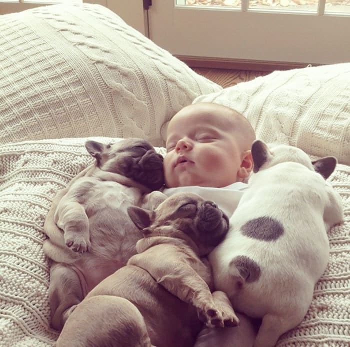 Baby Covered In French Bulldogs