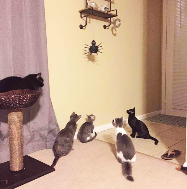 Well, The Cats Have Noticed The Halloween Decorations
