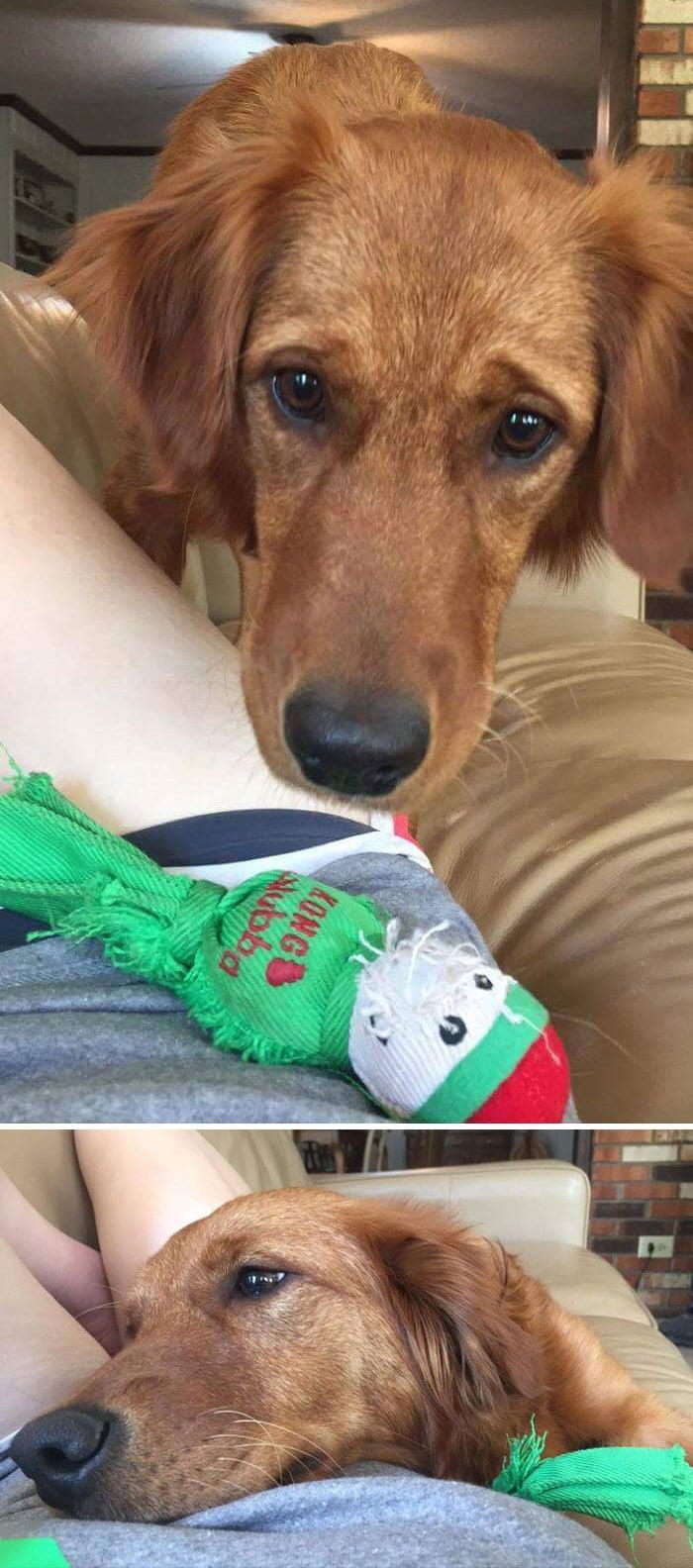 Собака моей подруги знала, что она плохо себя чувствует, поэтому она принесла ей игрушку
