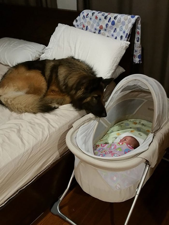 Мои друзья Собака Зои поздравляет их новорожденных Меньше, чем 3 дня назад