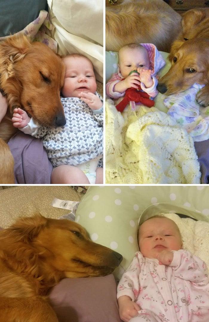 Я начинаю думать, что моя собака думает, что мой ребенок на самом деле ее ребенок