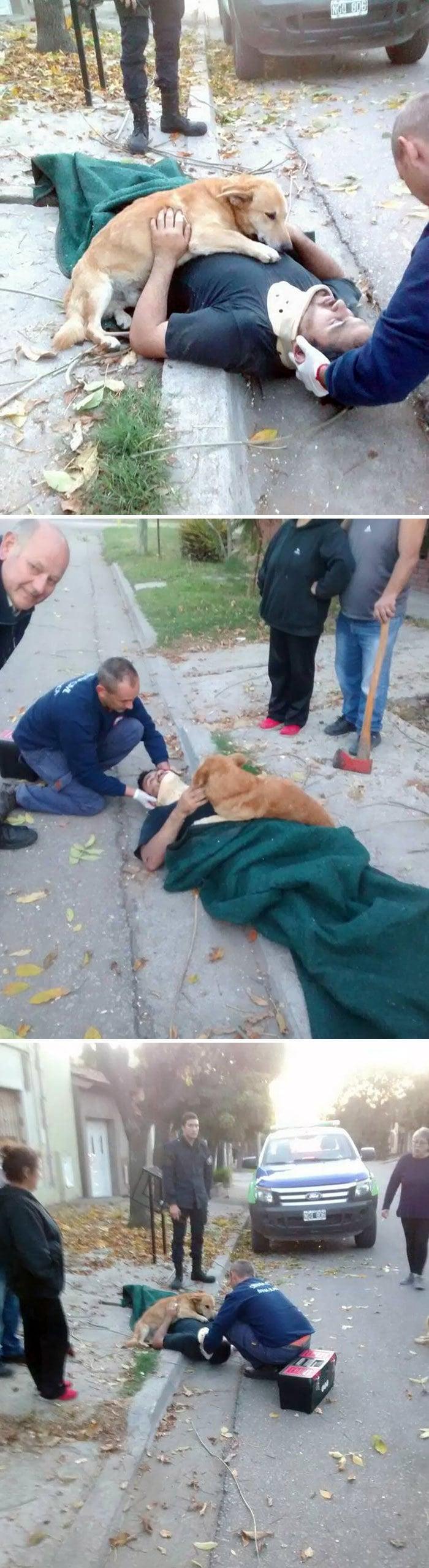 Обеспокоенная собака отказывается перестать обнимать своего владельца, который был ранен в результате падения