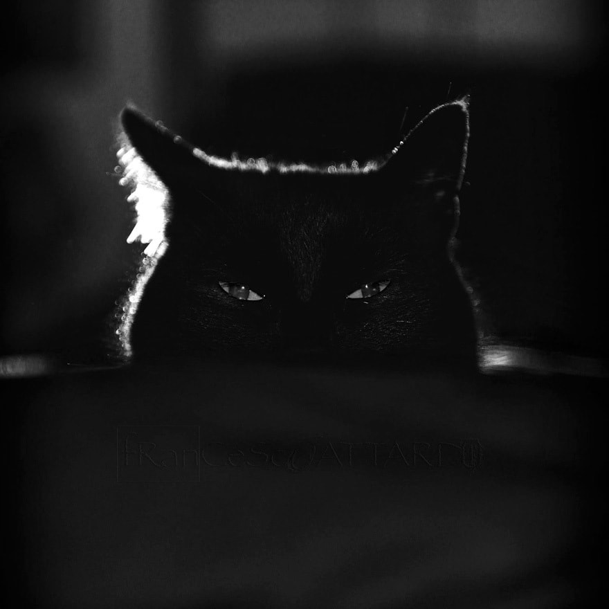 Mysterious Cat