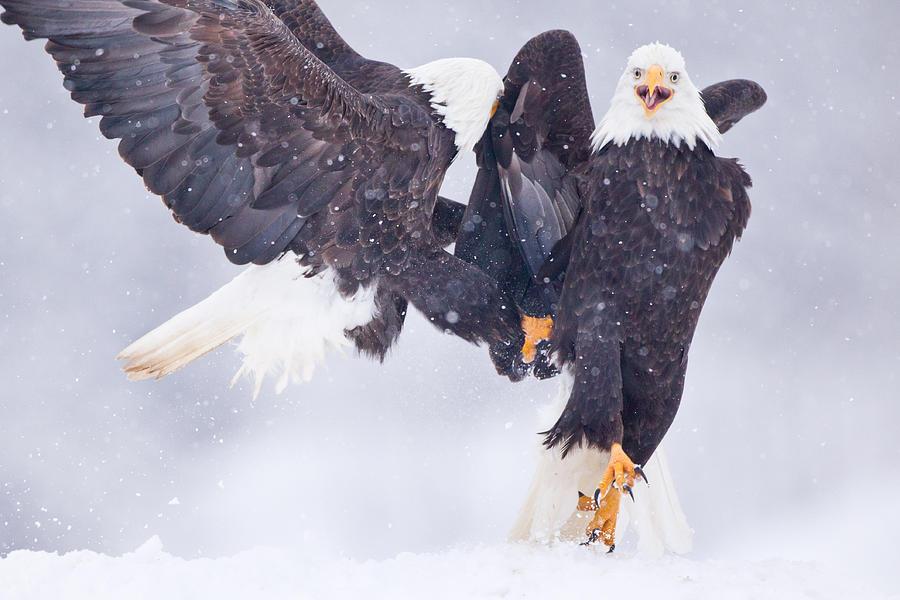 Ridiculously Photogenic Eagle