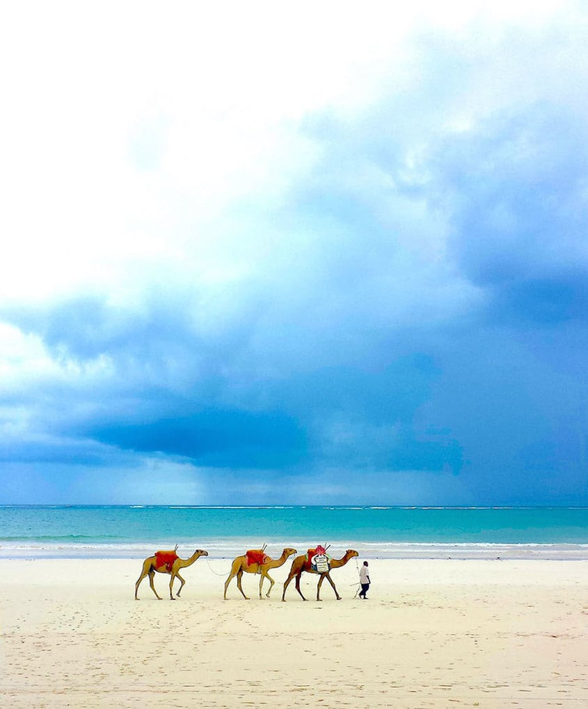 Dromedaries On Diani, 2nd Place In Wild Vacation (US) By Piers Nicklin, Age 12