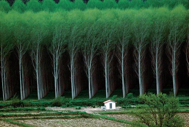 Perfect Forest
