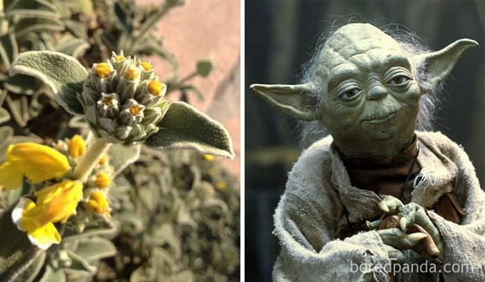 This Plant Reminds Me Of Yoda