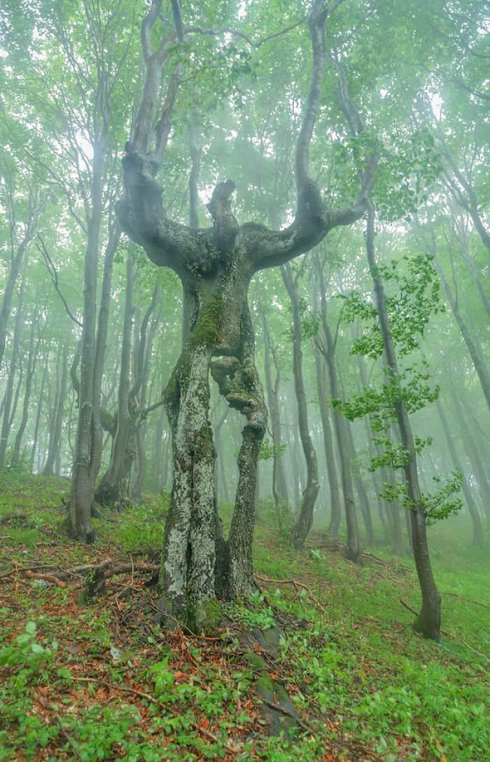 Это дерево выглядит как Ent