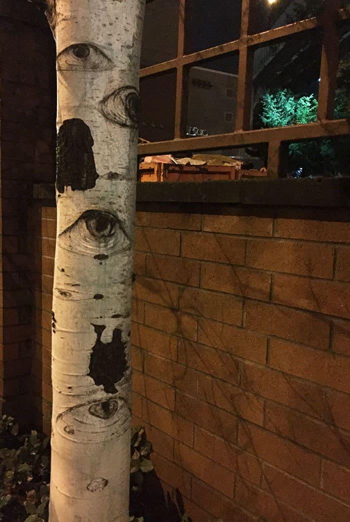 Это дерево похоже на глаза