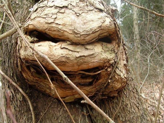 Дерево ниндзя подросток-мутантов