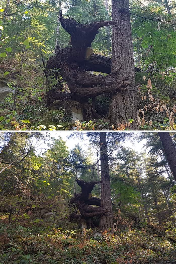 Дерево дьявола
