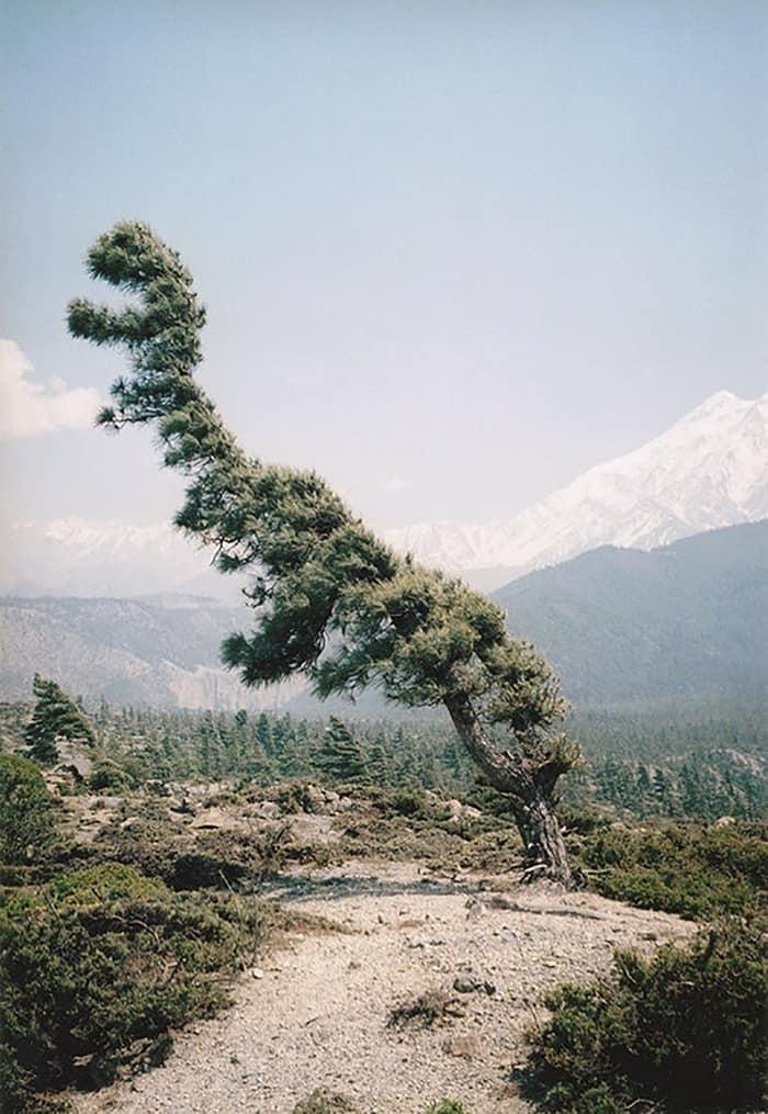 Дерево-Rex