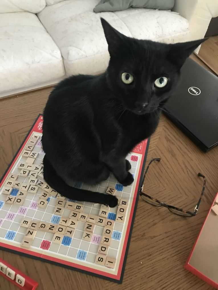 I guess our Scrabble game is over...